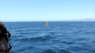 Trying to catch a seal in action during Whale Watching.MOV