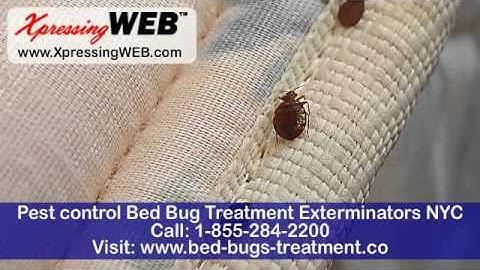 Pest control 1-855-284-2200 Bed Bug Treatment Exterminators NYC   bed-bugs-treatment.co