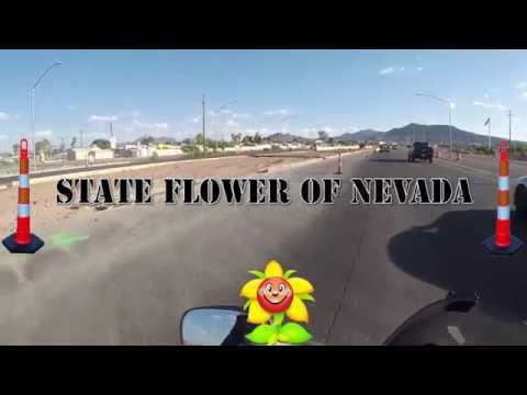 State Flower of Nevada
