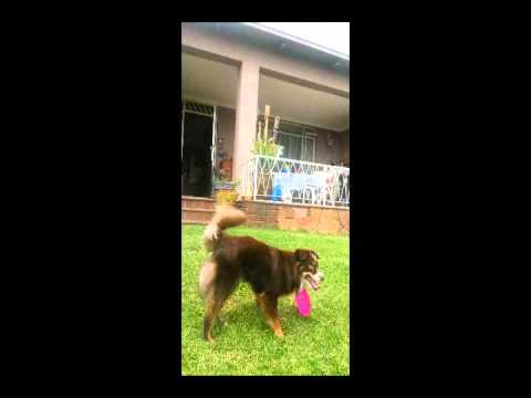Dog Training In Johannesburg South