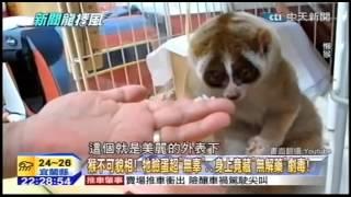 懒猴,鸭咀兽 有毒吗?