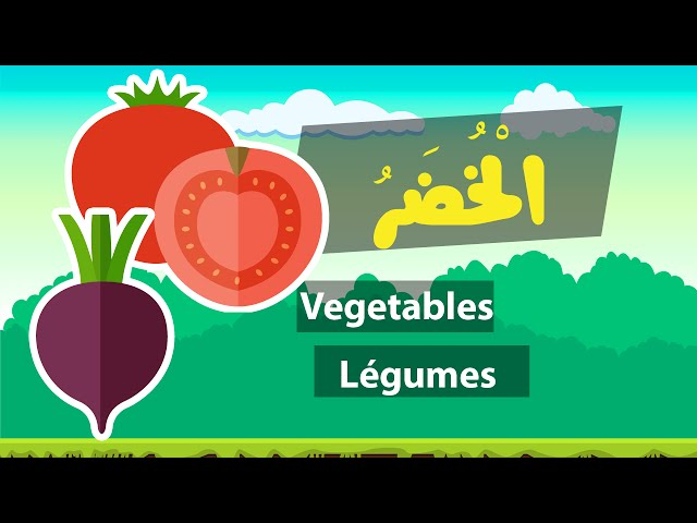 Learn arabic (vegetables) – Apprendre l'arabe (Les légumes) – مفردات الخضر باللغة العربية