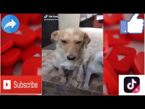 Cute And Funny Dog And Cat Video Tiktok Compilation Funny Dog