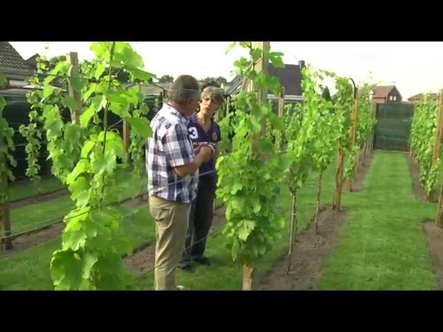 Wim Strijbos amateur wijnboer