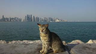 Voyage dans les Pays du golfe : Koweit - Bahrein - Qatar