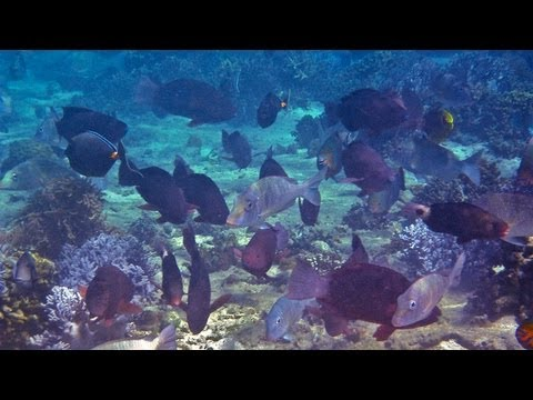 Science Bulletins: Fish Biodiversity Protects Coral Reefs