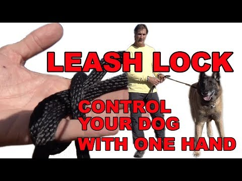 Control Your DOG with One Hand - Robert Cabral Leash Lock - Dog Training Secret