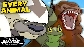 """25 Animals from """"Avatar: The Last Airbender"""" I Wish Were Real 🐧  Avatar"""