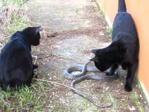 Biscia e gatti youtube for Biscia nera