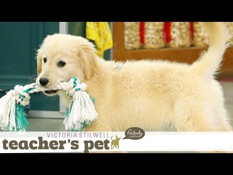 puppy-mouthing-(training-basics)-|-teacher's-pet-with-victoria-stilwell
