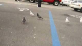 Feeding The Birds - Miami, Florida (Golden Glades Bus Station)