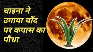 big update news: China grows the first plants on the Moon। चीन का अद्भुत कारनामा