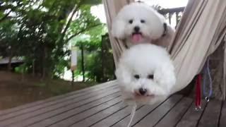 椿森コムナにて。末っ子シーちゃんが、一番お気に入り?^m^