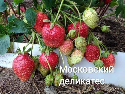 Клубника Московский деликатес