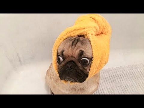 Funny Dogs Just Don't Want to Bath Compilation NEW