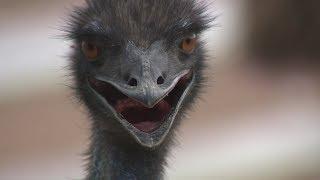 Семейная пара из Гафурийского района превратила разведение экзотических животных в доходный бизнес