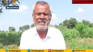 Farmers Facing Problems Wtih SRSP Canal Water   at Mahabubabad
