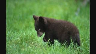 Black Bear (By:Black Bear) w/ lyrics