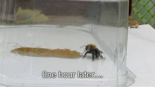 How to save a disoriented bee