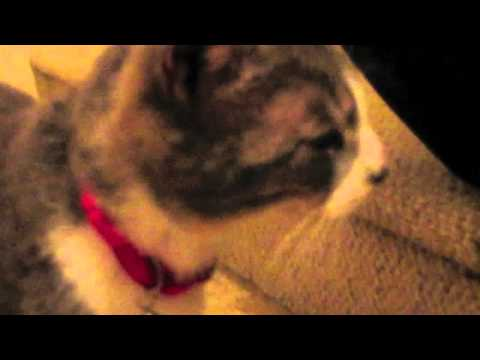Cat meowing at her kittens!!!