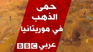 حمى الذهب في موريتانيا