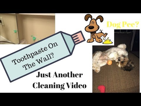 Toothpaste On The Wall? Cleaning Dog Pee? Rescue Me OdorKlenz!