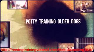 Solution To Your Problems In Potty Training Older Dogs