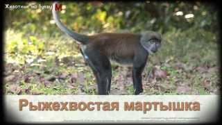 Животные на букву М (1)