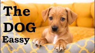The Dog Essay ( इंग्लिश से हिंदी ) Translate Very Easy Way