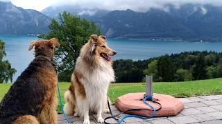 DOG VLOG:  Три собаки и я в маленьком раю Верхней Австрии