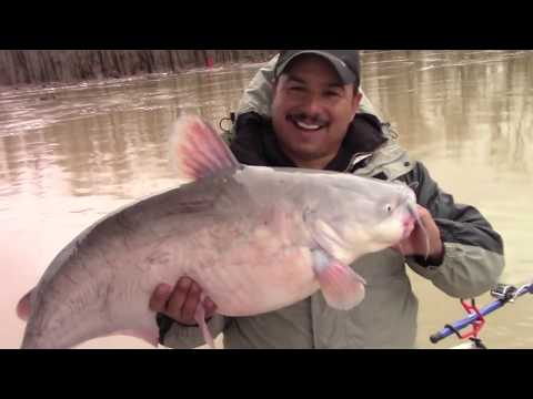 Surviving The Mississippi River- Fishing Flooded Rivers For Blue Catfish