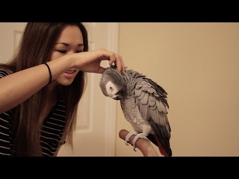 What's the First Thing I Should Train My Bird?