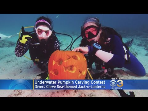 Floridians Compete In A Pumpkin Carving Contest