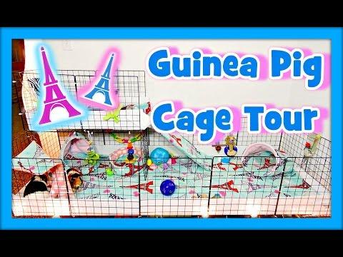 Guinea Pig Cage Tour | June 2015