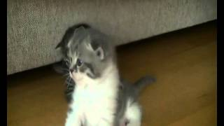 Маленькие озорные котята (КОТЕНОК)