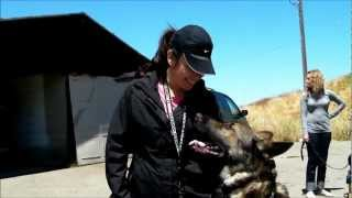 Cali K9® - Focus & Distractions - Bay Area Dog Training - San Jose