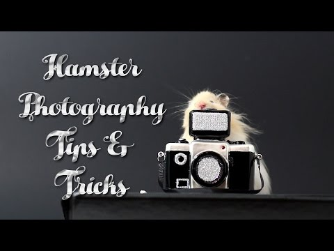 Hamster Photography Tips & Tricks! (In Depth)
