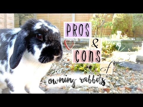 PROS AND CONS of Owning Rabbits | RosieBunneh