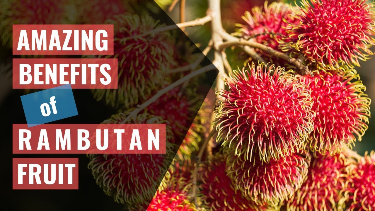 11 amazing benefits of rambutan fruit