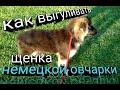 КАК ПРАВИЛЬНО ВЫГУЛИВАТЬ щенка немецкой овчарки? ЯЗЫК ТЕЛА, что ВАЖНО знать! Ирина и Бейлис.