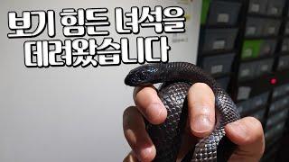드디어 데려왔습니다  돈있어도 데려오기힘들다는 거대뱀 …
