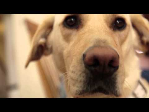 From precious pup to working guide dog