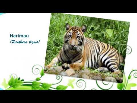 Media Pembelajaran Geografi: Persebaran Fauna dan Flora