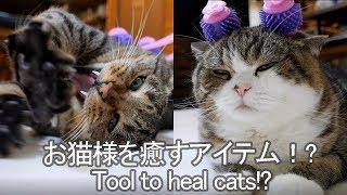 癒されるねこ-i-heal-maru