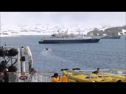Skua on deck at King George Island Antarctica