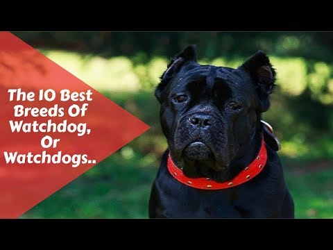 The 10 Best Breeds Of Watchdog, Or Watchdogs