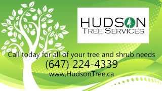 Hudson Tree Services - Professional Tree-Planting and Transplanting Arborists in North York, Ontario