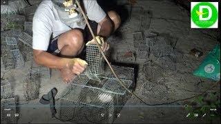 Cách người miền tây đặt bẫy chuột không cần mồi | mouse | phần 2