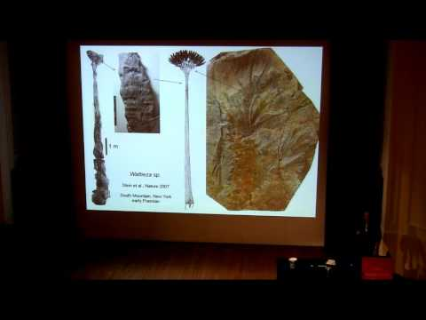 Rooted in Earth history: the Devonian transition to a forested planet