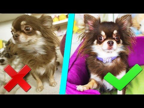 КАК Я СНИМАЮ СОБАК Учу ЩЕНКА Юми позировать ДРЕССИРОВКА собак и щенка КОНКУРС Magic Family